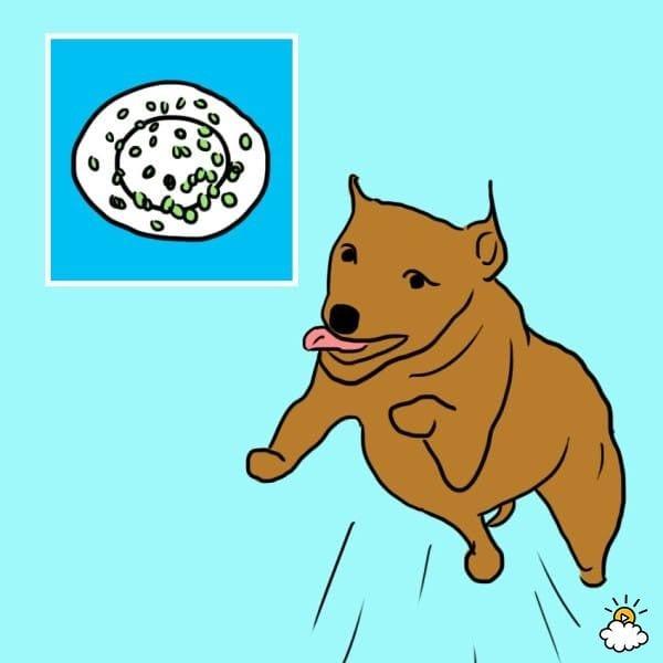 comida-sana-perros25