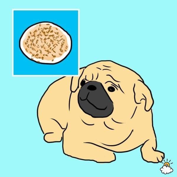 comida-sana-perros3