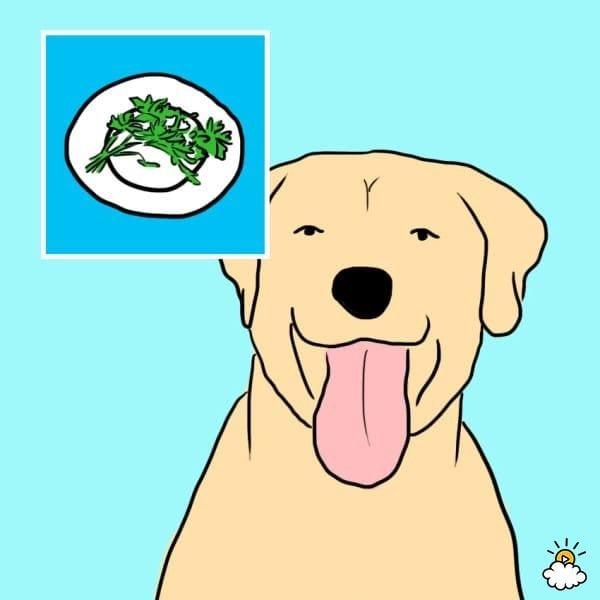 comida-sana-perros4