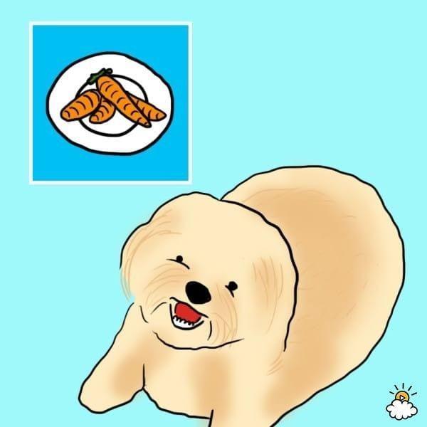 comida-sana-perros6