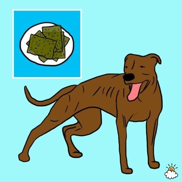 comida-sana-perros7