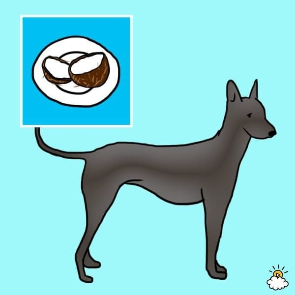 comida-sana-perros8