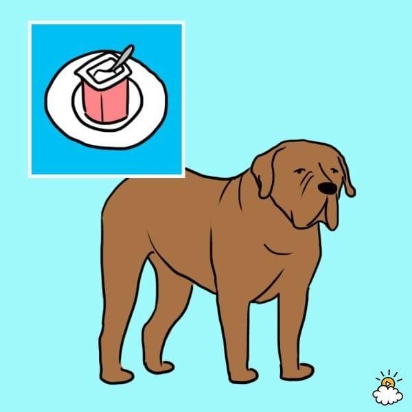 comida-sana-perros9