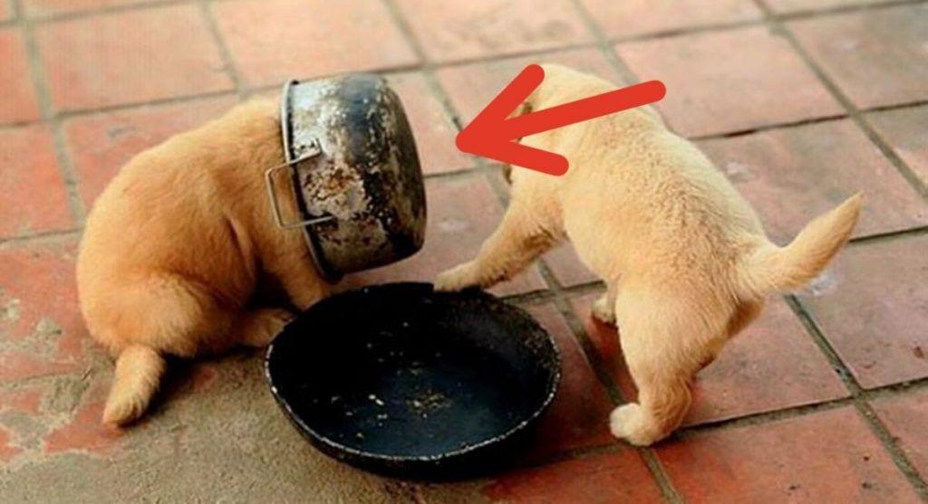 error de perro destacada 1