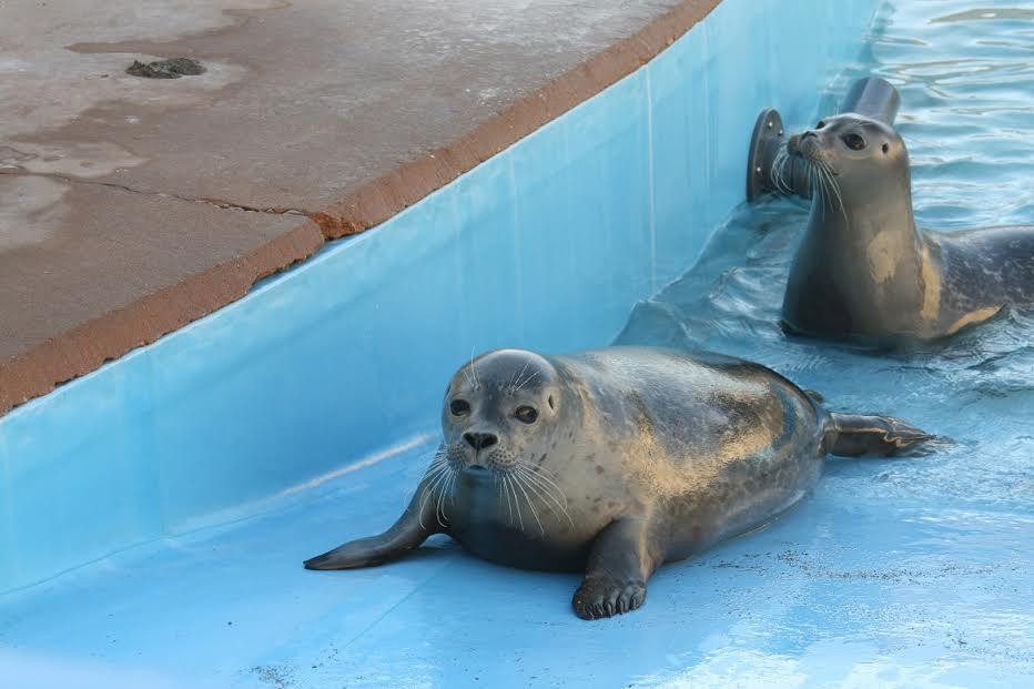 foca-rescate2