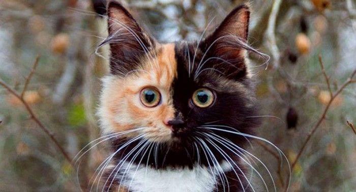 gato caras