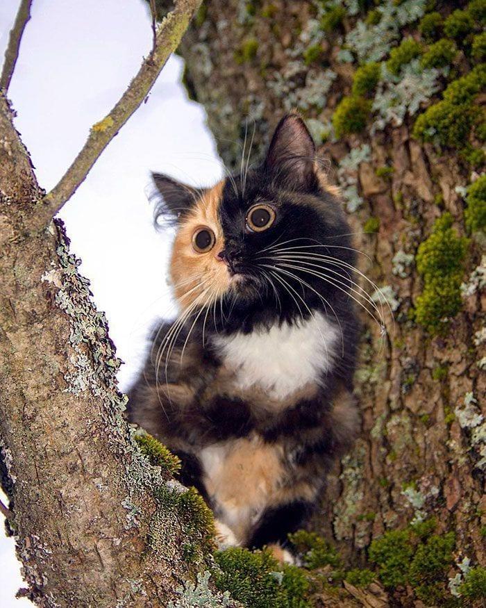 gato-dos-caras1