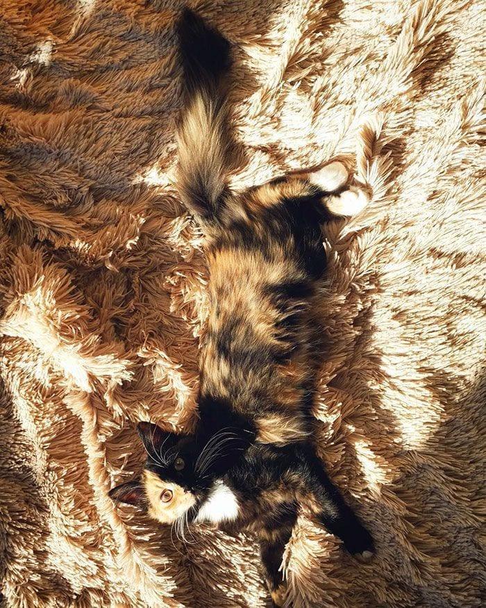 gato-dos-caras2