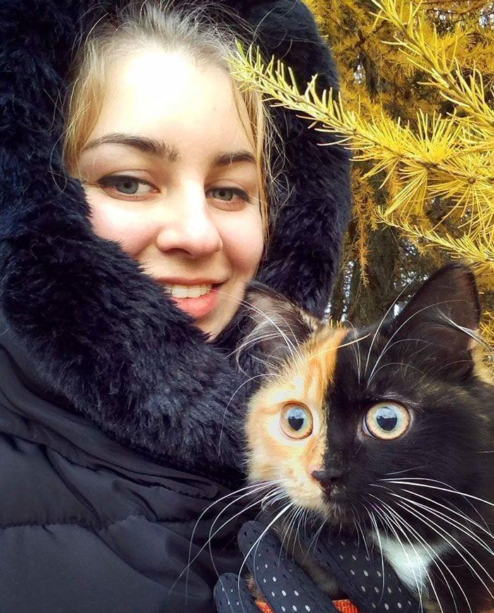 gato-dos-caras3