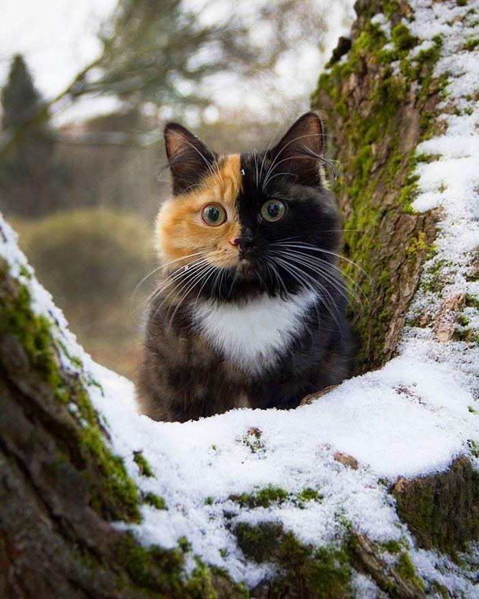 gato-dos-caras4