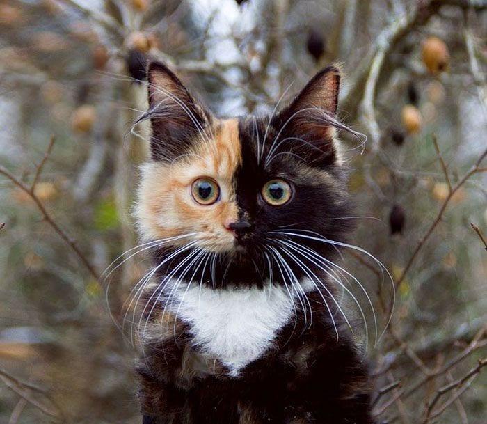 gato-dos-caras6