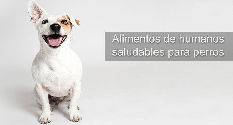 perro alimentos