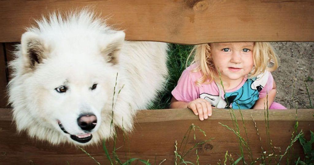 perro amigo crecer