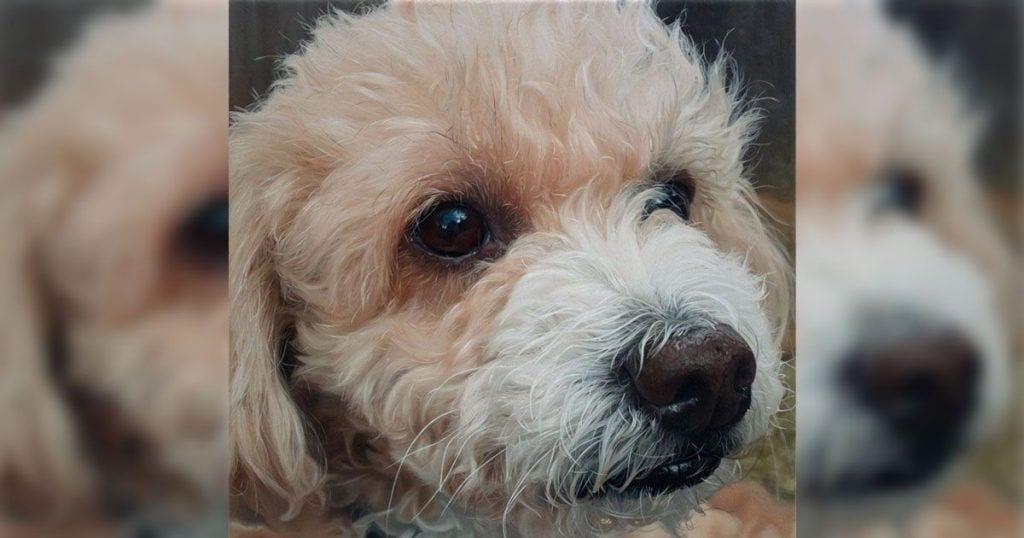 perro retrato destacada