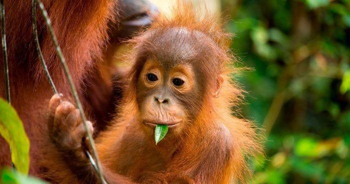 primates extincion 06