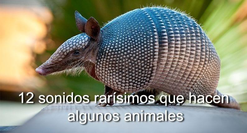 sonidos animales