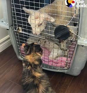 amigos-cabra-gato