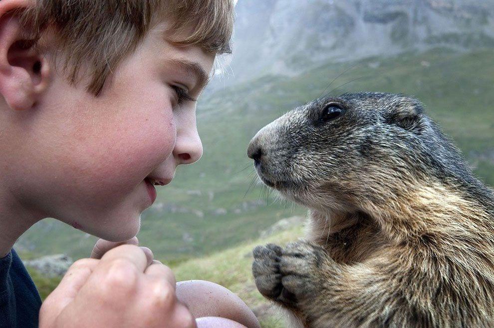 chico-amigo-marmotas1