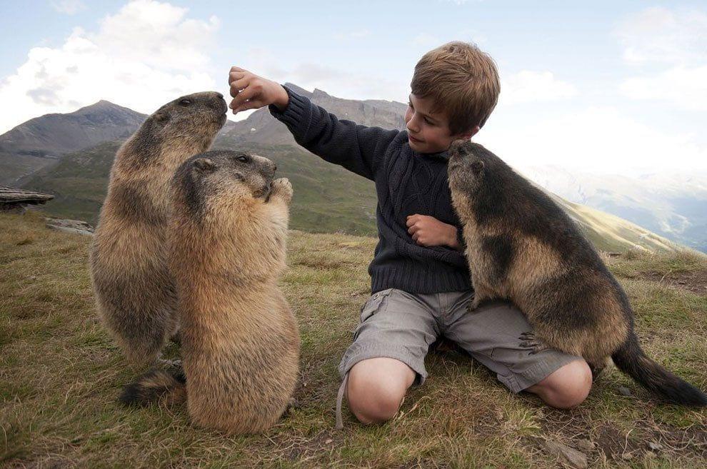 chico-amigo-marmotas5