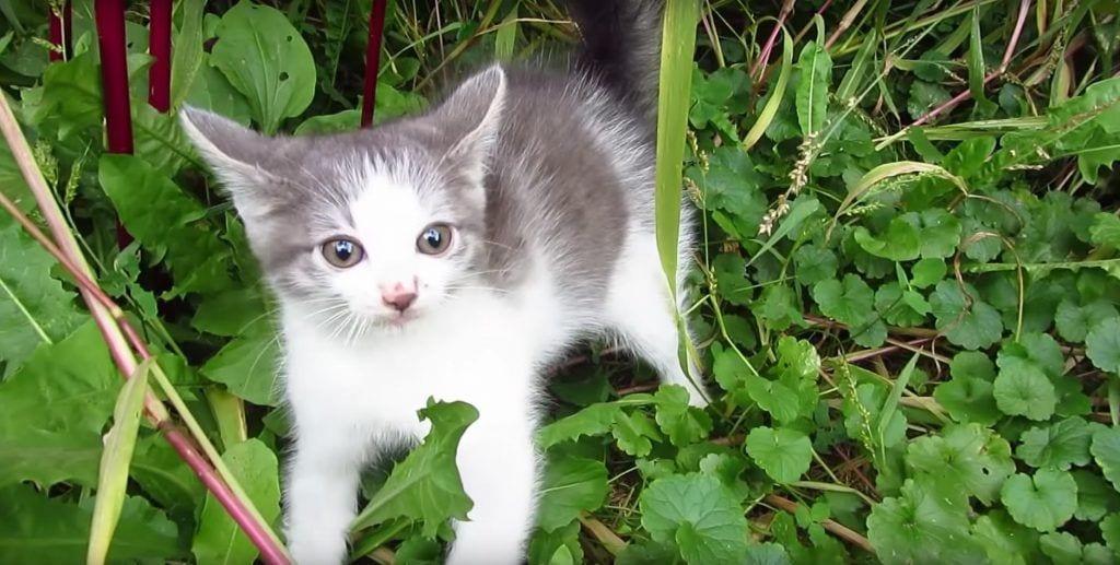gato-ve-humano-primera-vez3 copia