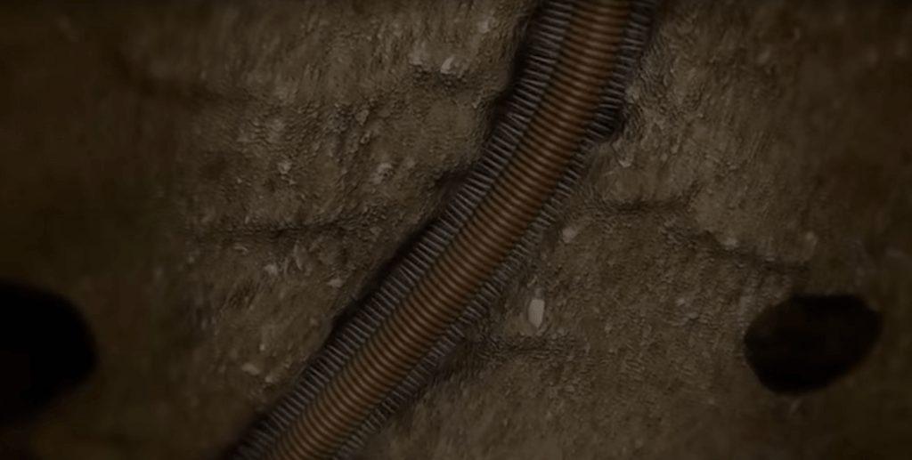 gusano-bobbit-02