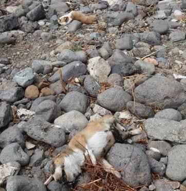 matanza-de-perros-2