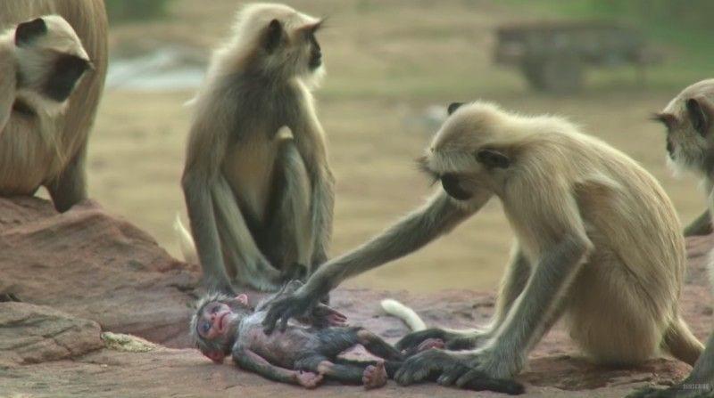 monos-bebe-falso2