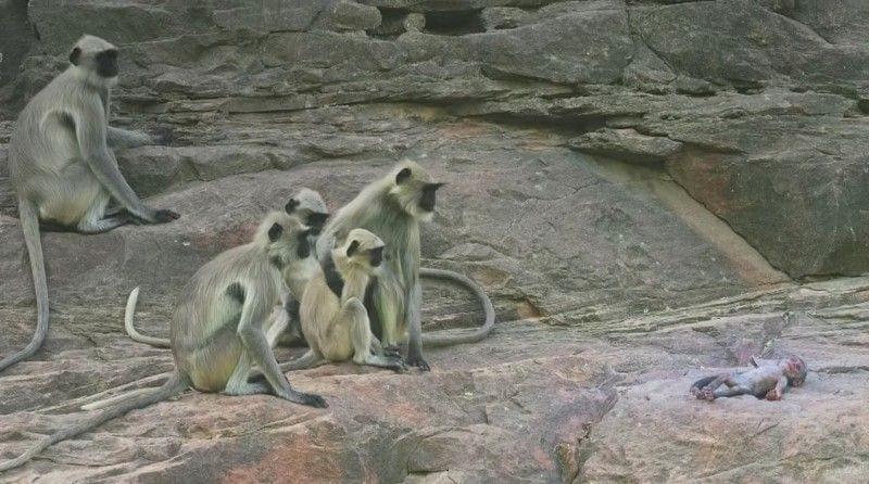 monos-bebe-falso3
