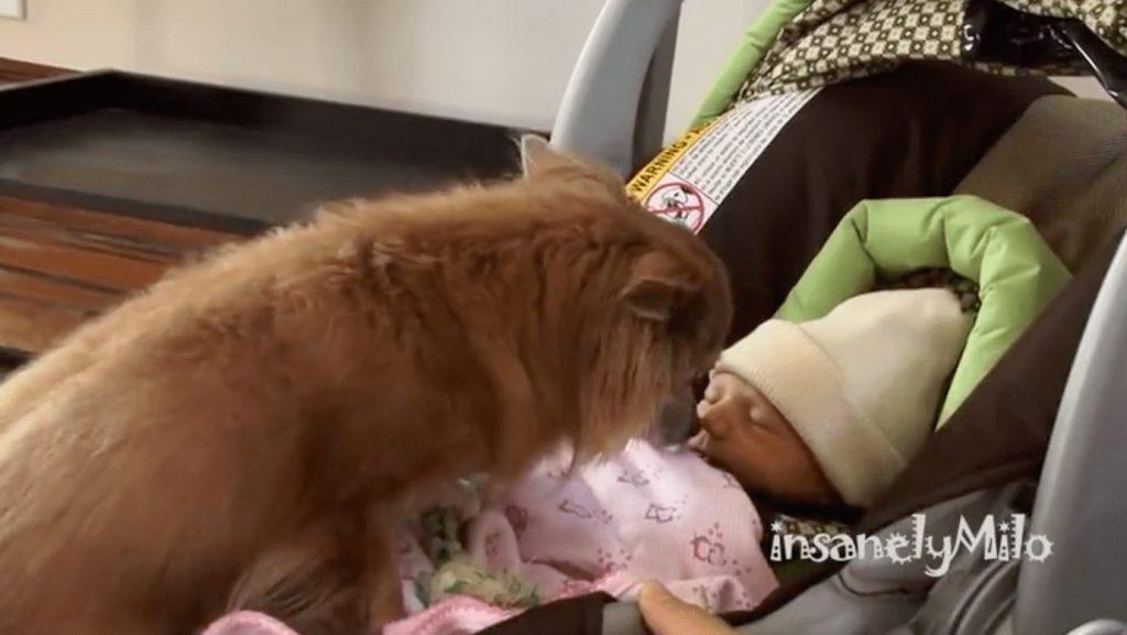 perro-conoce-bebe-humano1