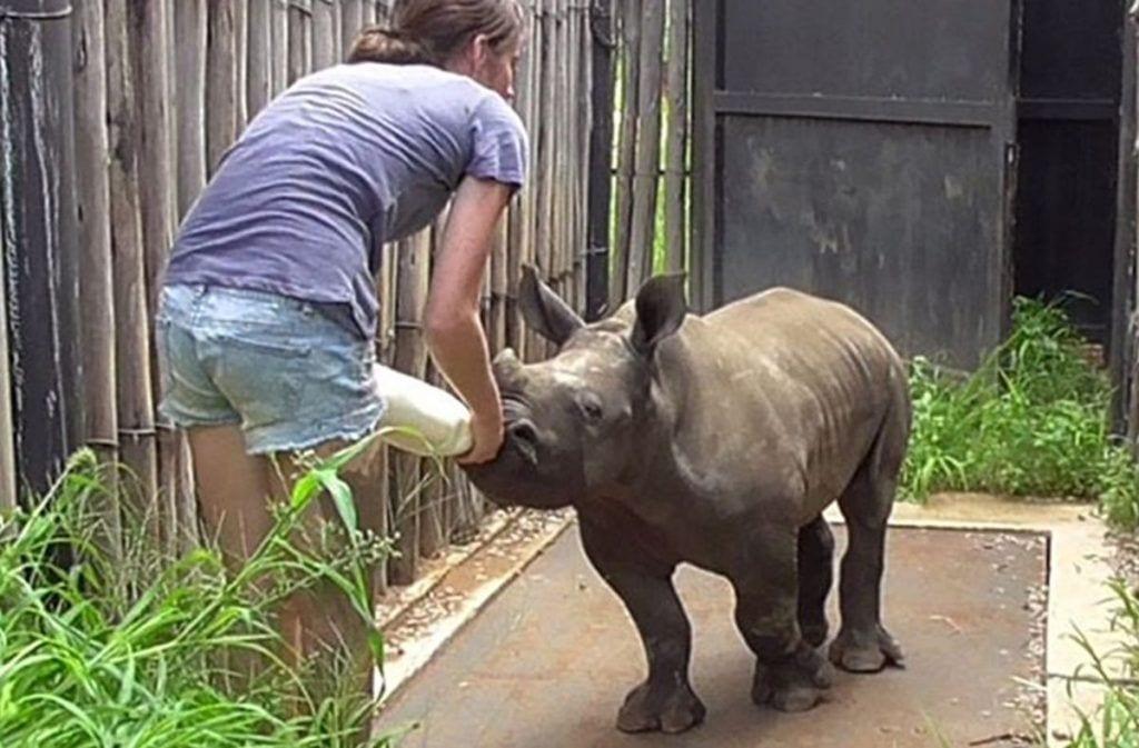 rinoceronte-gato-amigos-destacada