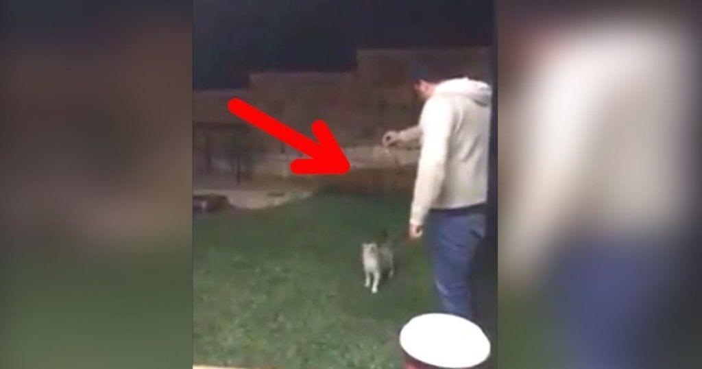agresion gato