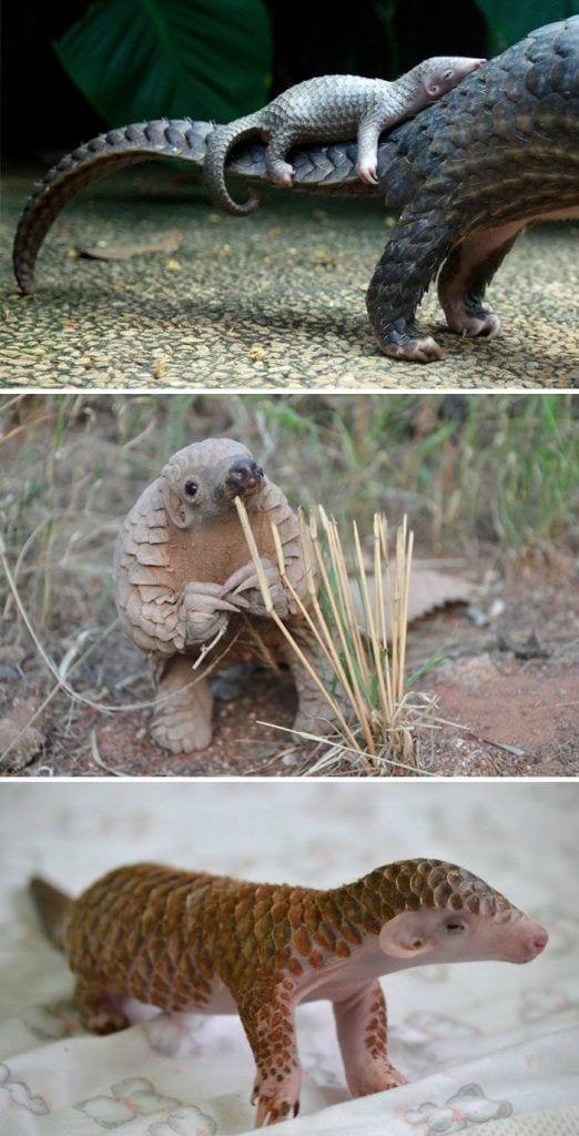 animales-bebes-raros10
