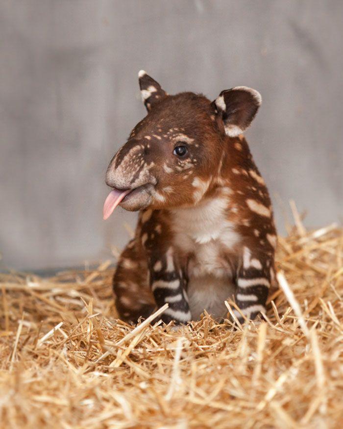 animales-bebes-raros11