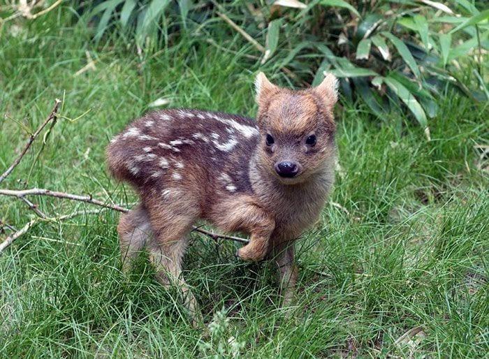 Tiny Baby Deer