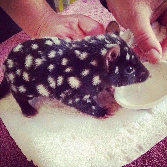 animales-bebes-raros3