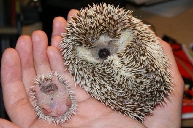 animales-bebes2