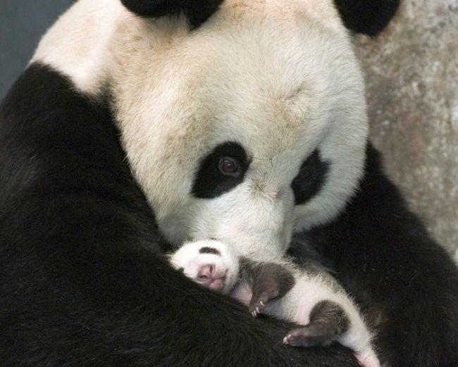 animales-bebes3