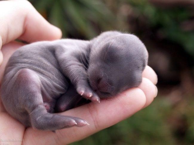 animales-bebes7