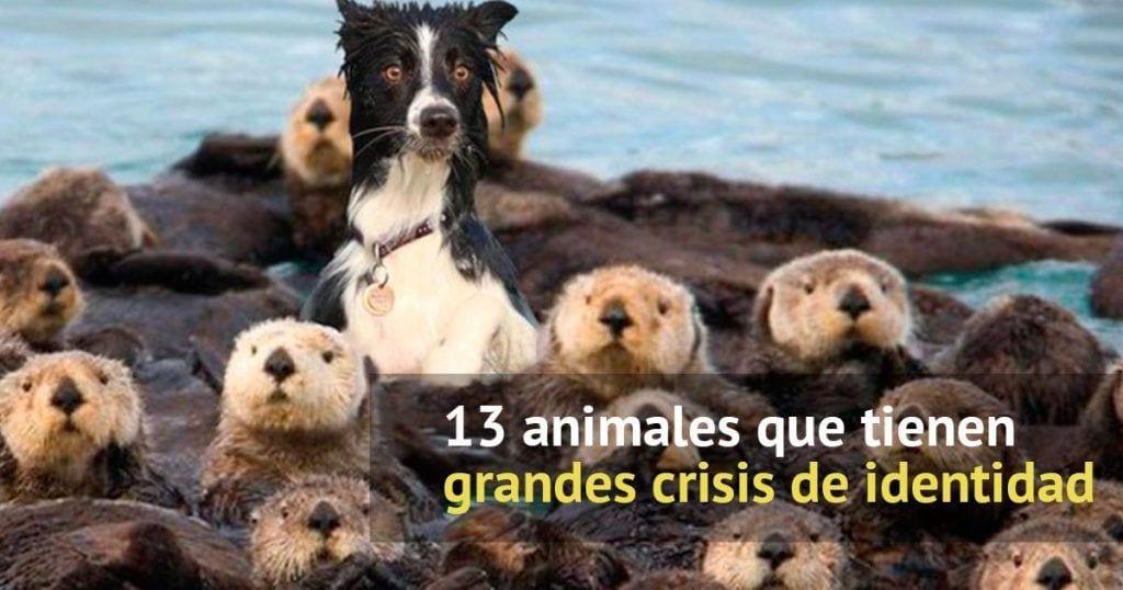 animales crisis identidad