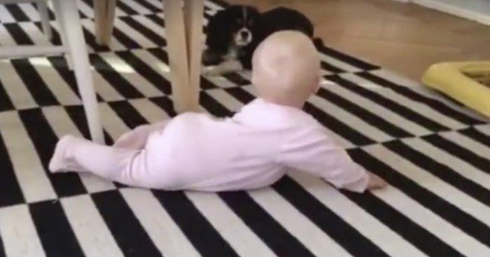 bebe perro juegan