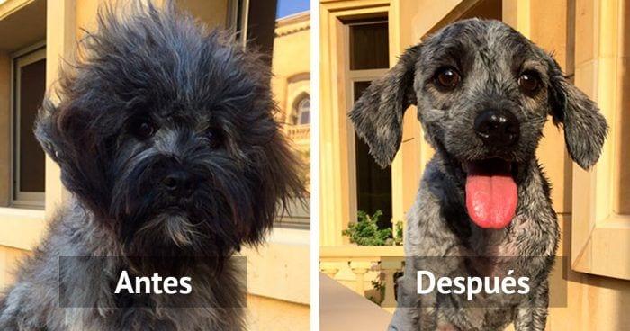 corte de pelo perros
