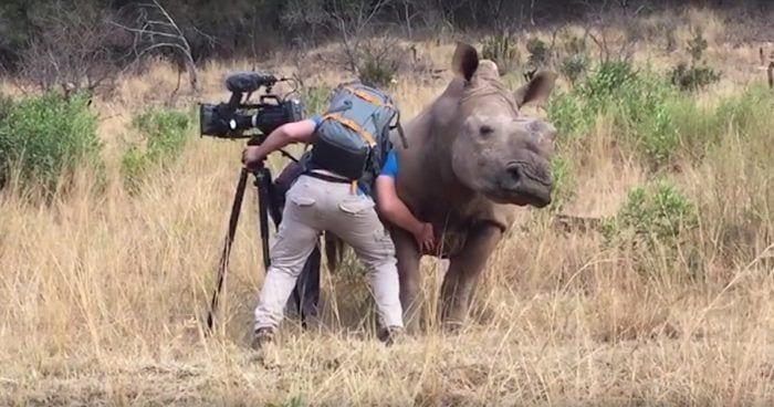 cosquillas a rinoceronte