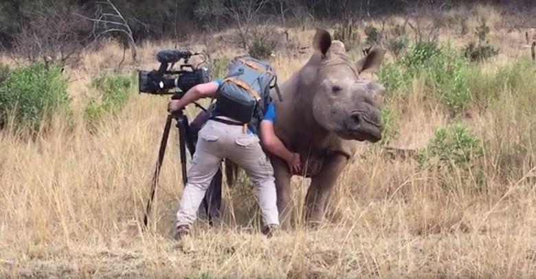 rascando-a-rinoceronte