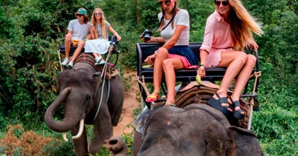 En tus vacaciones maltratas animales