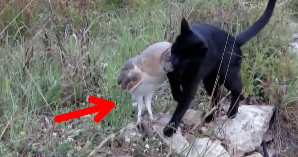 gato buho amigos
