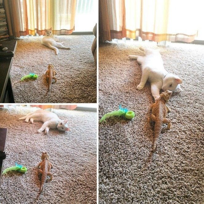 gato-lagarto-amigos1