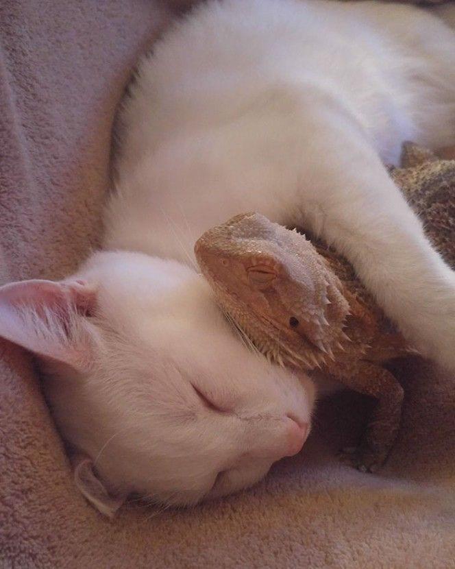 gato-lagarto-amigos4