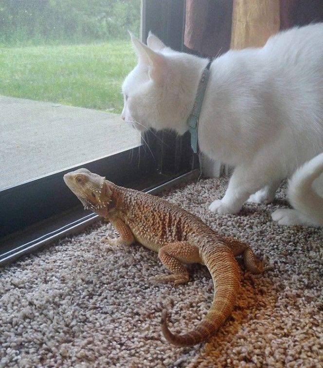 gato-lagarto-amigos6