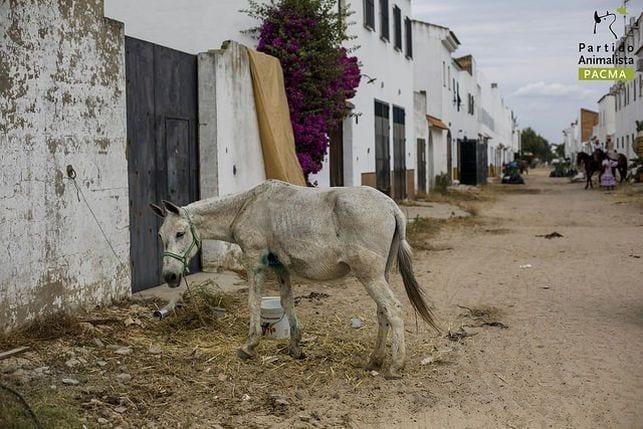 maltrato-animal-vacaciones10