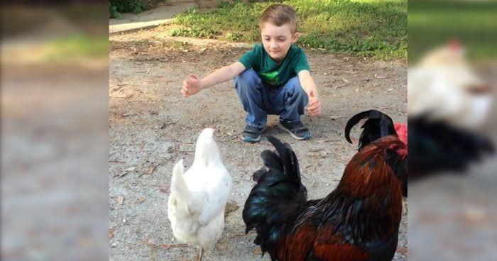 nino abraza gallina destacada